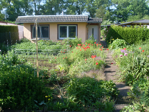 Wuchernder Garten, in dem irgendwo ein paar Kulturpflanzen versteckt sind