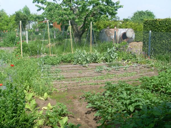 Vorn links und hinten rechts kann man einzelne Tabakpflanzen erkennen