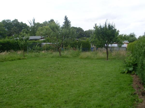 Rasen und wild wuchernde Wiese im Juli 2013 (oberer Teil)