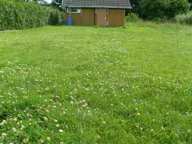 """Der """"Rasen"""" vor der Tat. Frage von Juri: """"Wann mähst Du denn den Rasen?"""""""