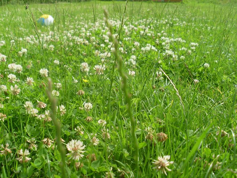 Soviele wunderbare Blüten sollen gemäht werden