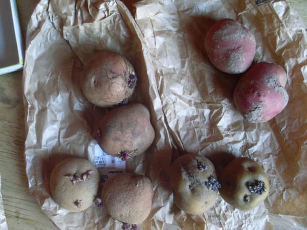 Kartoffeln aus Peru
