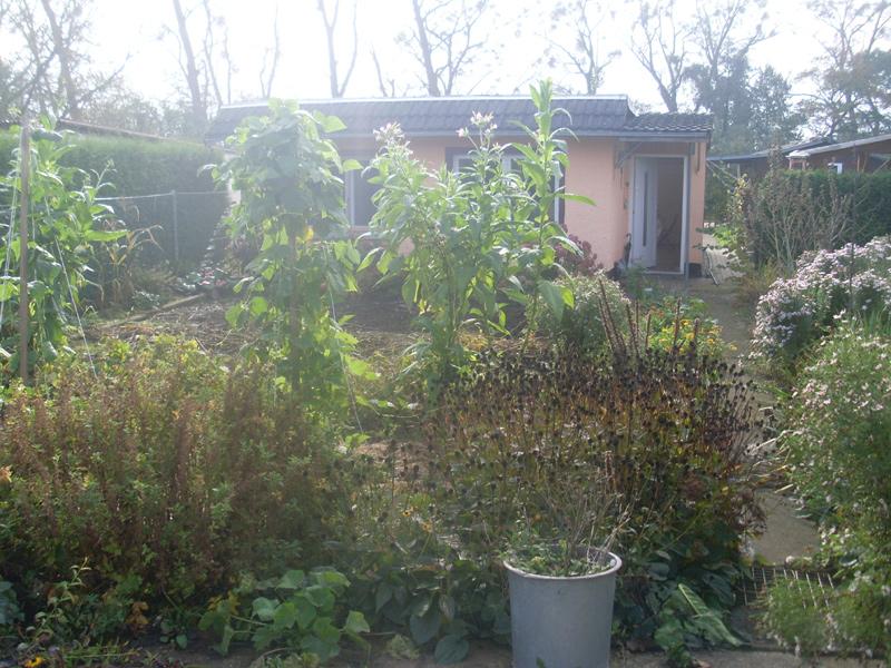 Die Sonne scheint in meinen Garten am Morgen des 18. Oktober 2014