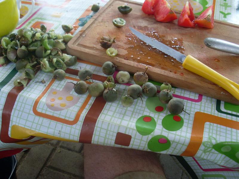 Die alten Sorten auf der hinteren Parzelle hatten genügend Früchte angesetzt