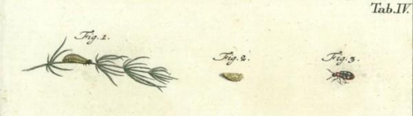 Tab. IV