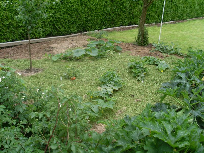 Die Ecke mit Kürbisen, Gurken und Zuckini am 28. Juni, frisch gemulcht mit Rasenschnitt