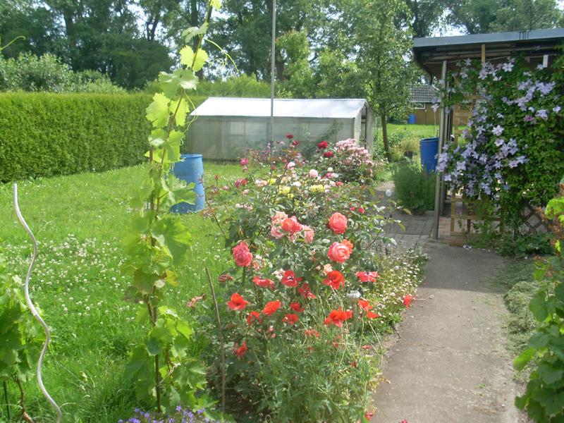 Alle meine Rosen am 28. Juni
