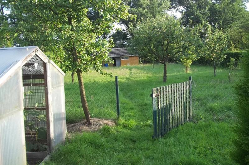 Am Eingang zum Gewächshaus kann man die Auberginen sehen (zumindest die Blätter)