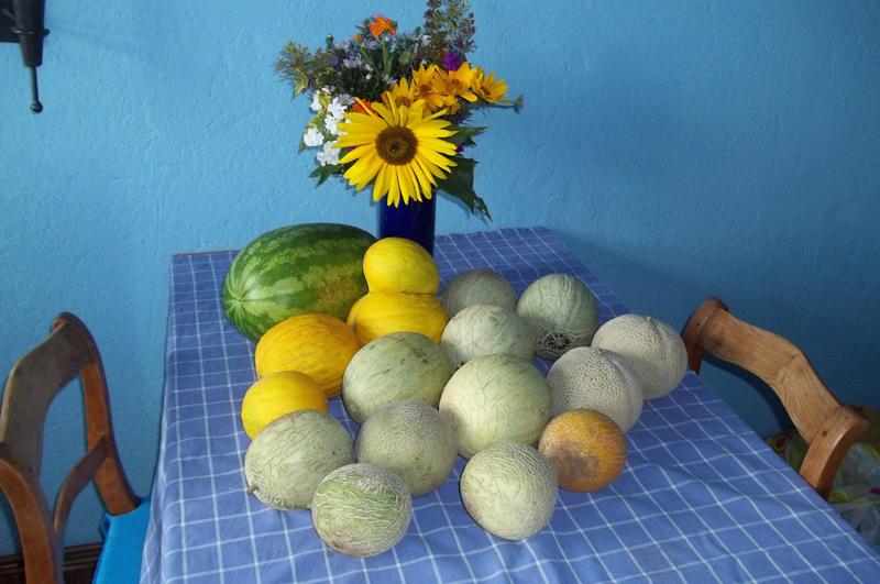 Zweite und letzte Ernte am 24. September