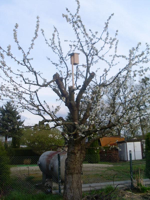 2014-04-13_Starenkasten