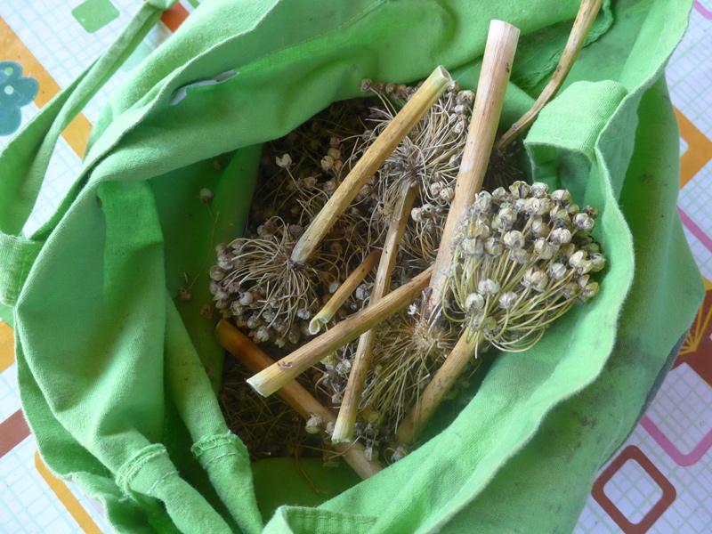Getrocknete Samenstände im Stoffbeutel