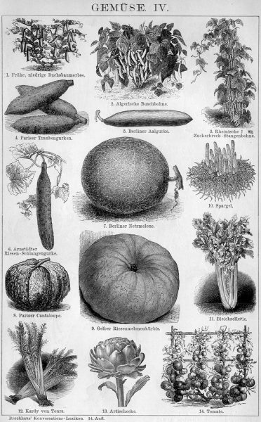 Tafel IV Gemüse