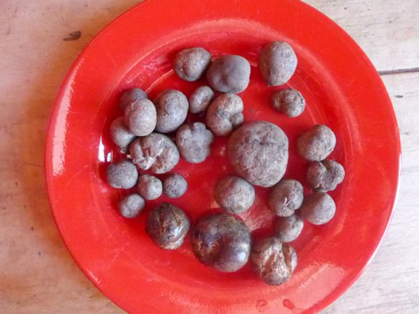 Odenwälder Blaue auf einem roten Teller