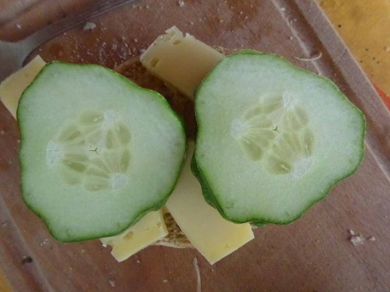 Käsebrötchen mit Salatgurkenscheiben