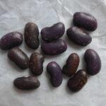 Violette Bohnen mit beeschen Sprenkeln