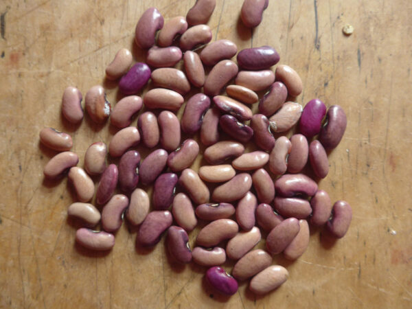Blass-violette Bohnenkerne