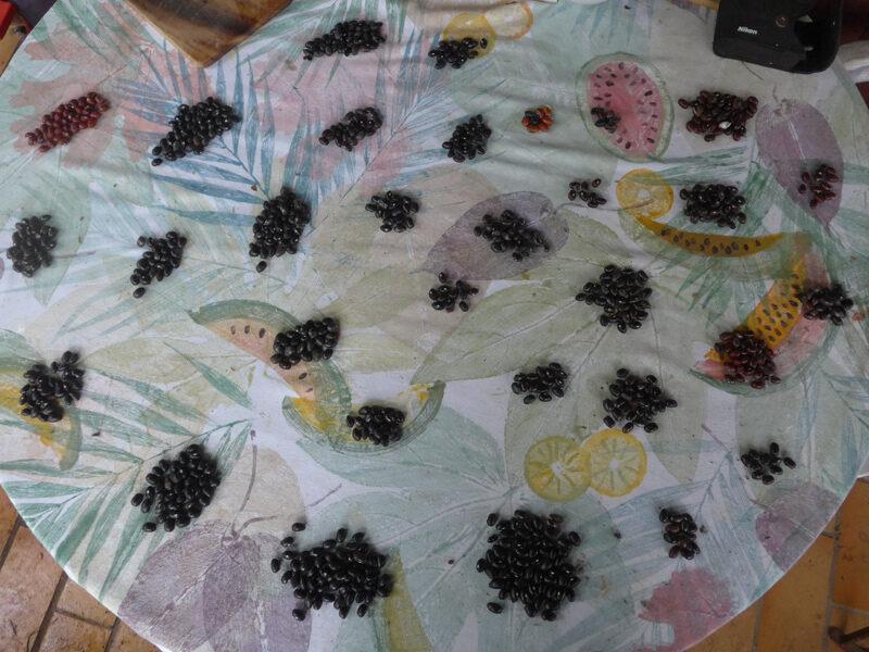 Häufchen von schwarzen, braun-schwarzen und braunen Bohnenkerne