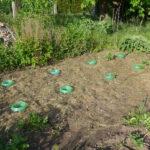 Schneckenkragen mit Zukkini-Jungpflanzen