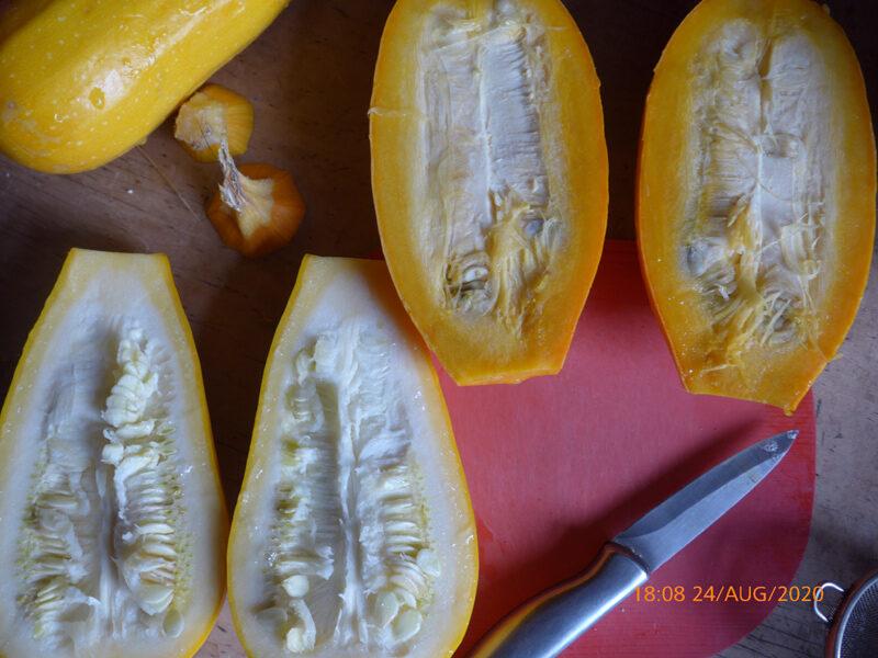 Aufgeschnittene gelbe Zukkini mit unterschiedlicher Fleischfarbe