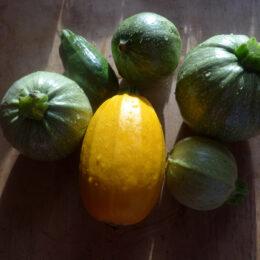 Runde und gelbe Zukkini