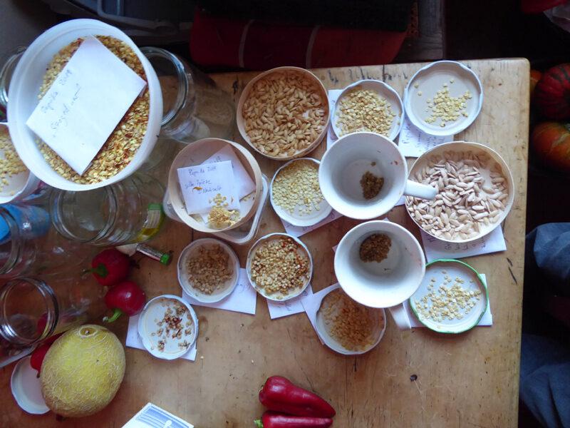 Samen verschiedener Arten