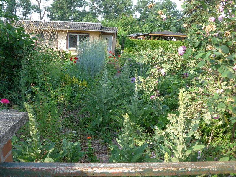 Der verwachsene Eingang zu meinem Garten