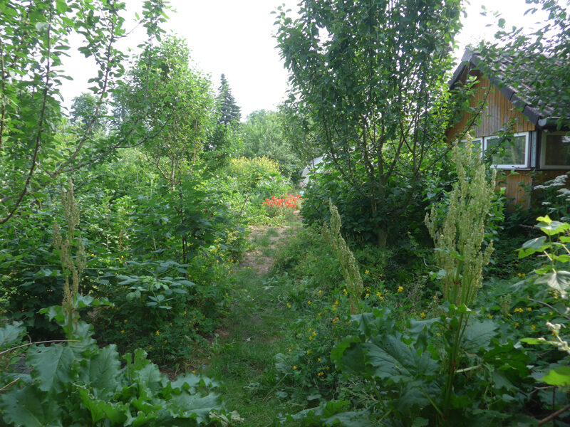 Hinterer Gartenausgang mit Apfelbaumsämlingen
