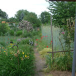Blick zurück durch den Vorgarten