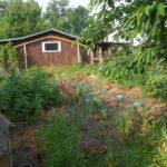 Geplante Anbaufläche für Tomaten