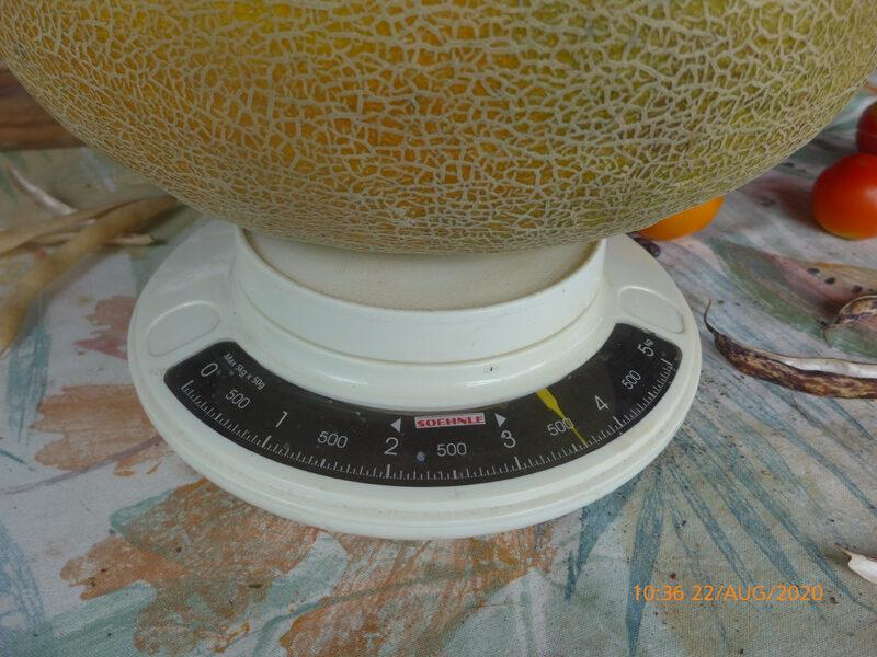 Sieger-Melone 2020 mit 3800 Gramm