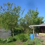Aprikosenbäume am 30. Mai